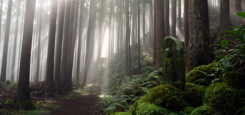 Enjoy Kumano Kodo Pilgrim Route without walking?!